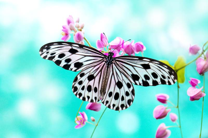 Butterfly with pink flowers